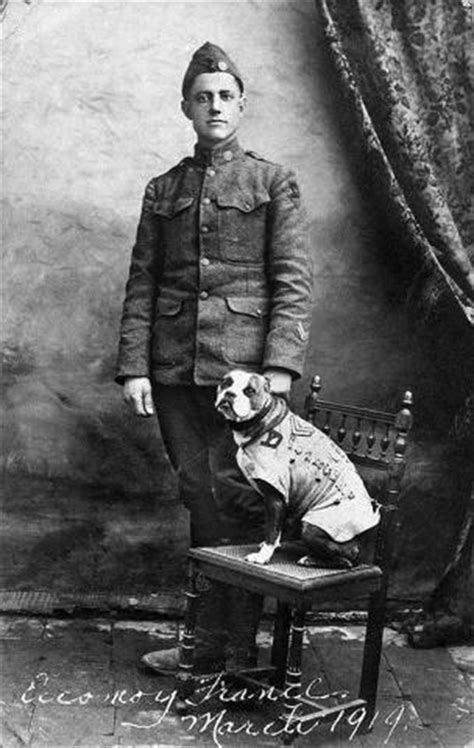 Sergeant Stubby German 6 Common Phobias Found In Our Collections National Museum Of American History