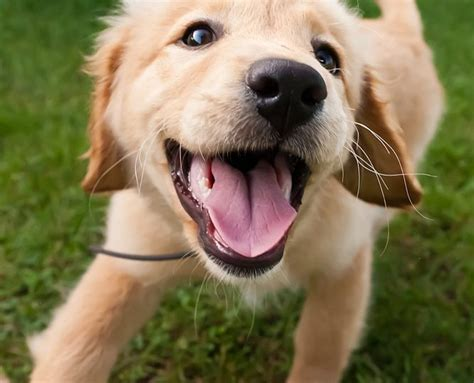 best puppies 11 best breeds for extroverts rover