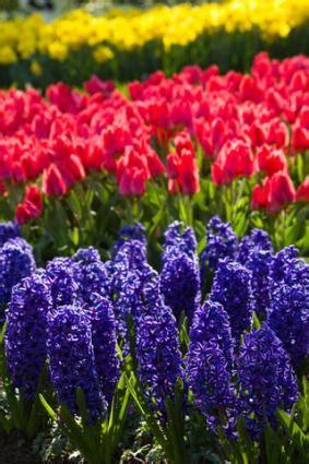 a list of spring flowers | lovetoknow