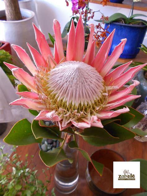 flores exoticas on pinterest 21 pins flores ex 243 ticas flores ex 243 ticas pinterest