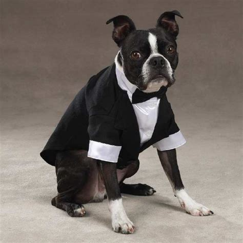 puppy tuxedo view pet wedding clothes yappily after groom tuxedos for dogs by petedge