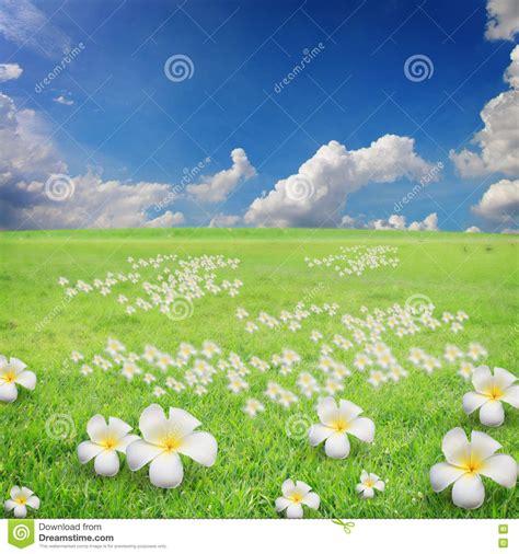 bloemen en wolken de blauwe hemel met wolken en bloemen op gras stock foto