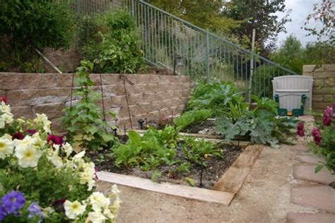 Winter Vegetable Garden California Greener Designs How To Grow A Winter Vegetable Garden In
