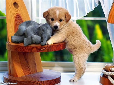puppy news puppy and tiny elephant pictures