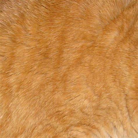 cat skin upholstery magnificent collection of animal fur texture designs cssdive
