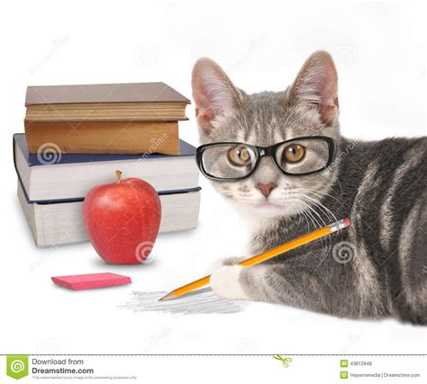 Cat In The Essay by Smart Cat Writing With Books On White Stock Photo Image Of Cutout 43812948