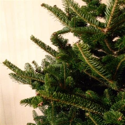 how to remove christmas tree sap from your hands a