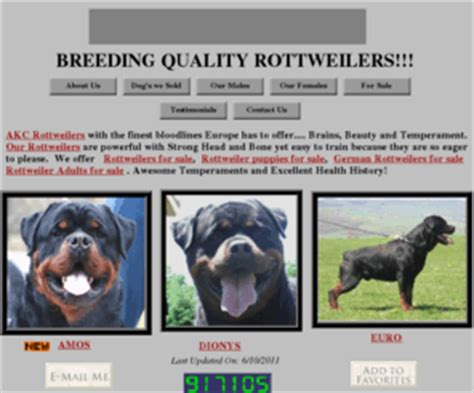 german rottweiler puppies for sale in ny choicek9s rottweiler puppies for sale german rottweilers rottweiler breeder ny