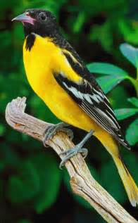 national aquarium international migratory bird day