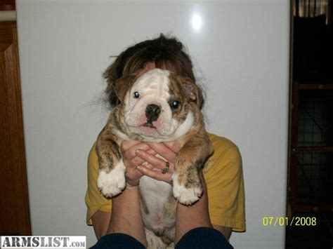 bulldog puppies for sale in indiana cheap object moved