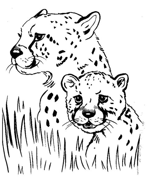 Realistic Cheetah Coloring Pages by Realistic Animal Coloring Pages Free Printable Animals