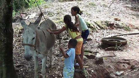 mujer es cogida por un burro montada de burro sierra 2012 youtube