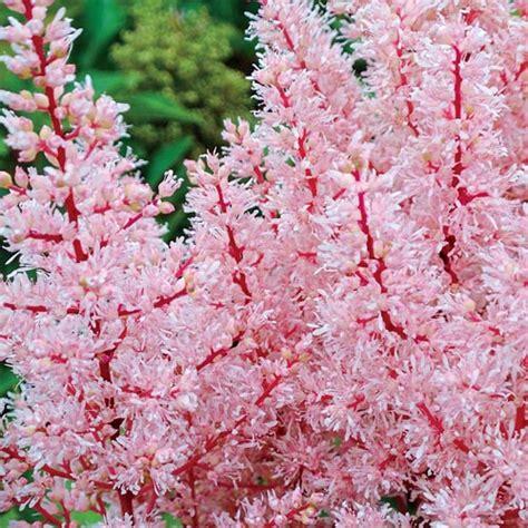 shade perennials for canadian gardening breck s canada