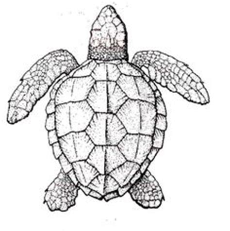 intricate turtle coloring page detailed sea turtle advanced coloring page a to z