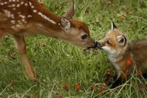 deer and fox pals cute n tiny
