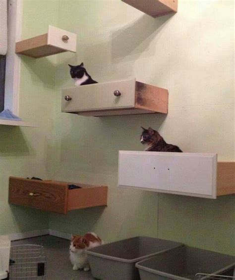 cat drawers catify your walls ideas