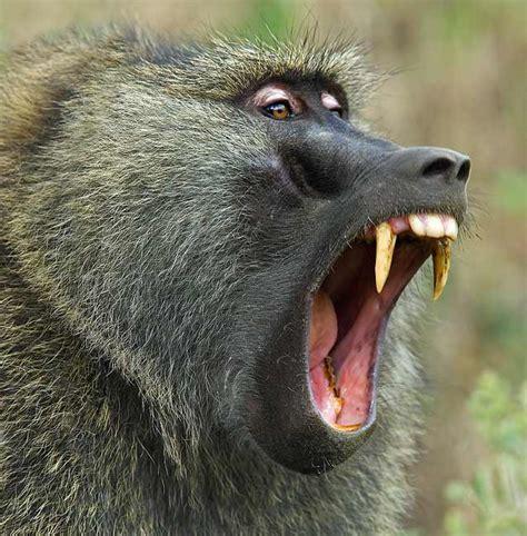 zoology web page project
