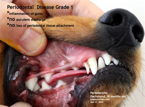 problems in dogs canine veterinary surgery anaesthesiaveterinary surgery anaesthesia singapore toa