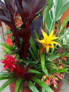 Tropical Outdoor Plants - patio garden ideas plants photograph tropical plants for p
