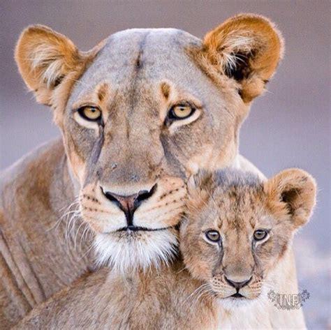 imagenes variadas animales pin de regina en animaux pinterest imagenes variadas