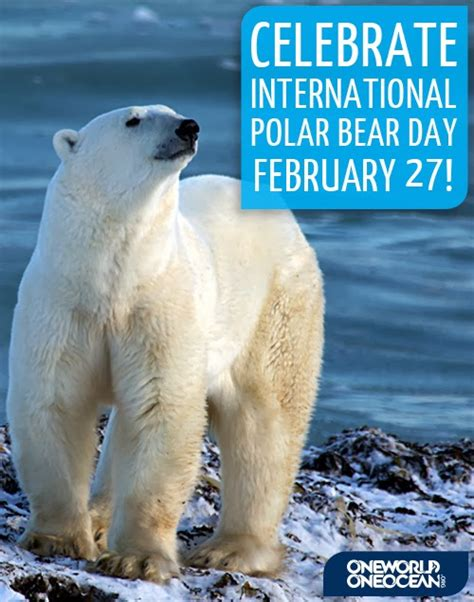 day bears gera 231 227 o polar portugal dia internacional do urso polar