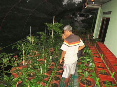Mencari Bibit Stevia mewalik jaya family jalan jalan ke toko pertanian