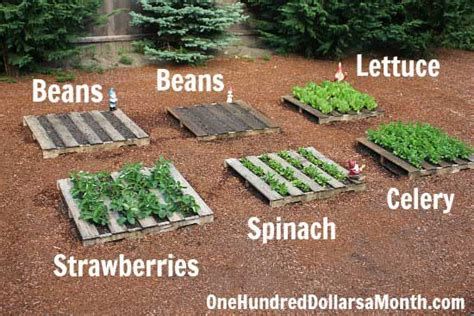 How To Start A Vegetable Garden Bed How To Build A No Fuss Vegetable Pallet Garden Iseeidoimake