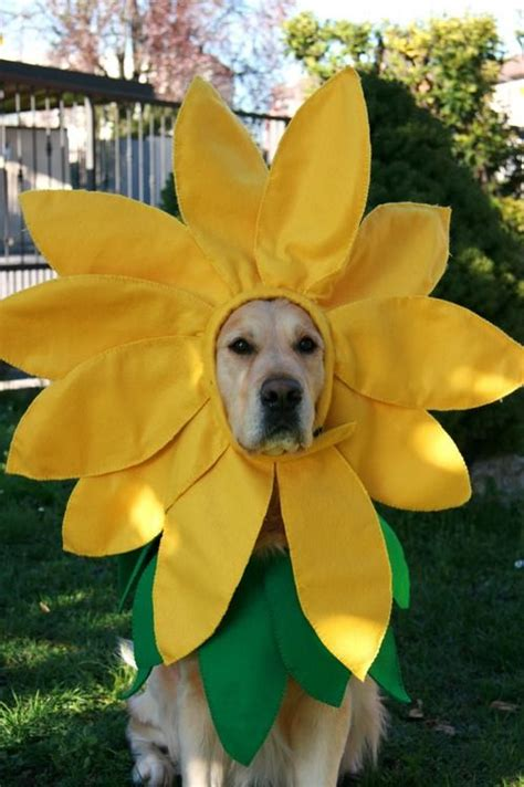 golden retriever lubbock 25 best ideas about flower costume on costumes costumes and