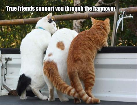 true friends support through hangover funny meme funny memes