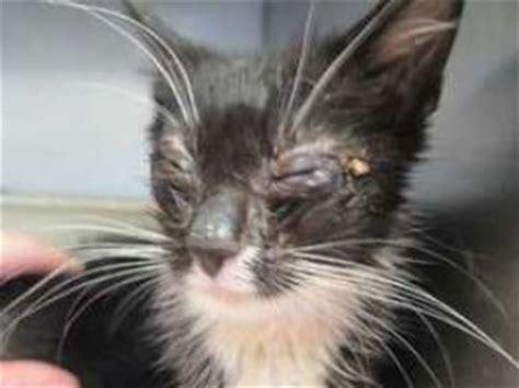 old cat disease stress and respiratory disease petfinder members