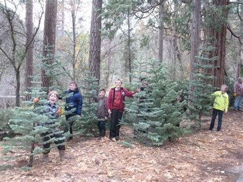 north fork scouts christmas tree sale sierra news online