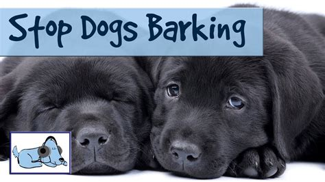how to get dog to stop barking how to stop dogs barking help stop your dog from barking with our dog music youtube