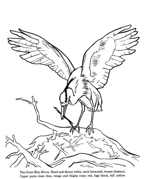 coloring pages blue bird blue bird coloring pages for kids images pictures