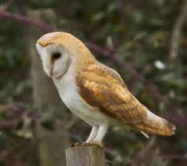 bella the barn owl zoo 4 you animal parties
