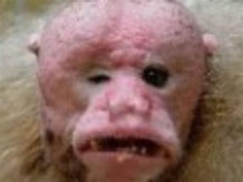 imagenes animales mas feos del mundo 191 cu 225 l es el animal m 225 s feo del mundo el imparcial