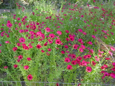 Southwest Gardener by Southwest Gardener S August Checklist
