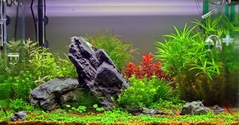 aquarium decorations creating homes  fishes aquascape
