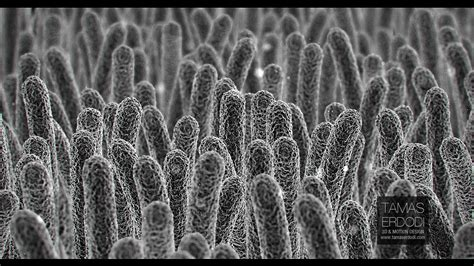 Interior Items For Home electron microscope tamaserdodi com