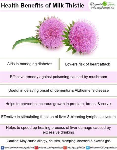 Side Effects Of Milk Thistle Detox the 25 best milk thistle benefits ideas on