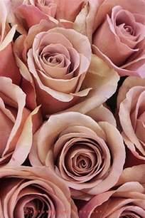 Vase Wholesalers Rose Cafe Latte