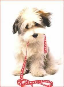 puppy birthday cards gangcraft net