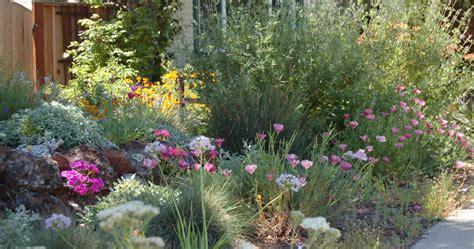 ca backyard kelly marshall garden design specializing in beautiful california native low water