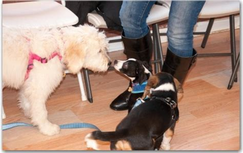 puppy obedience near me now coupons near me in schaumburg 8coupons