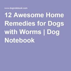 12 awesome home remedies for dogs with worms puppy