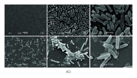 pattern formation in pseudomonas aeruginosa biofilms bioguided fractionation shows cassia alata extract to