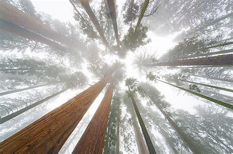 sequoia national park   influential places