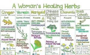 herbs chart the natural store liz cook wall chart a woman s healing herbs
