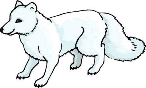 coloring page of arctic fox arctic cliparts