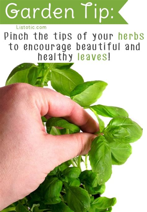 garden tips 20 insanely clever gardening tips and ideas flowers vegetables