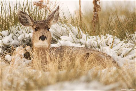 deer bed deer bedding down images